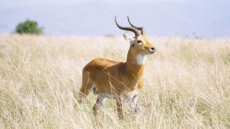Sudanese wildlife
