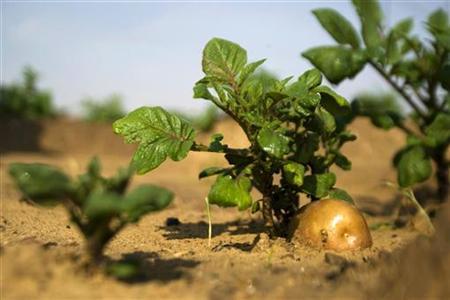 eco farming, eco, agriculture