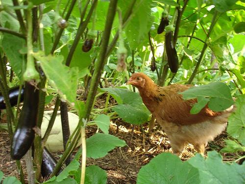 eco friendly vegetable gardening