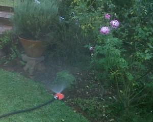 greywater irrigation system