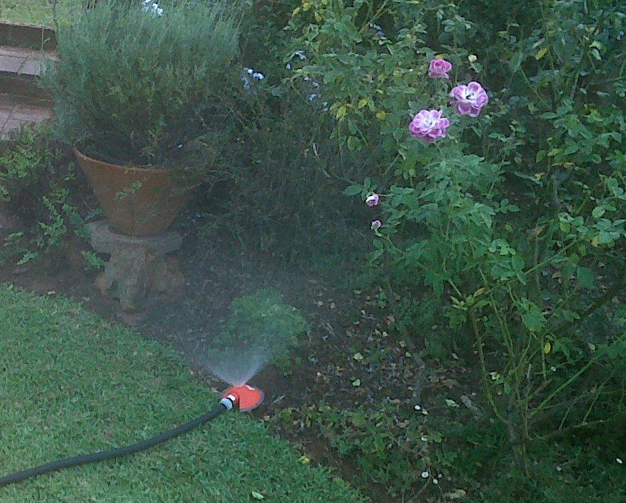 Gray Water Irrigation 7