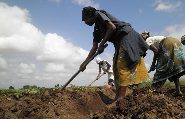 zimbabwe rainwater harvesting