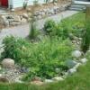 rain gardens rain harvesting