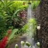 greywater gardening