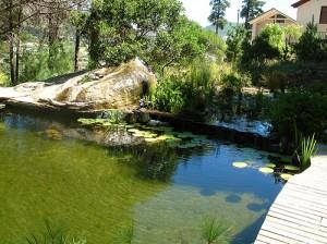 eco friendly pool