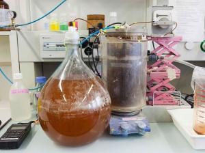 urine fertilizer