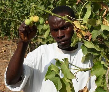 biofuels africa