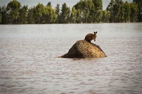 flooding rockhampton