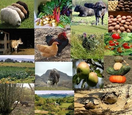 organic vs conventional farming