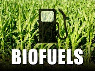 biofuel vs food