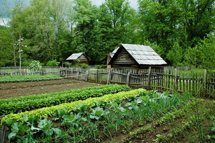 gardening for survival