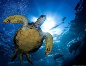 sea turtles and solar panels