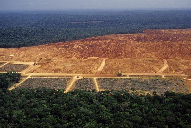 rainforest destruction brazil