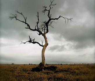 destruction of amaxon forest