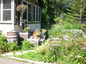 rain barrels and rain gardens