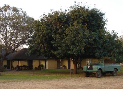 bushveld green jojo tank