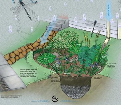 rain tanks and rainwater gardens